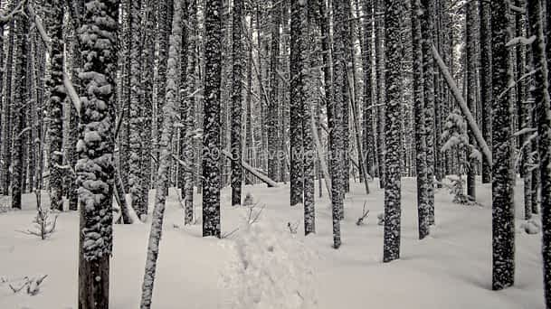 Snowshoeing in the Castle Crown